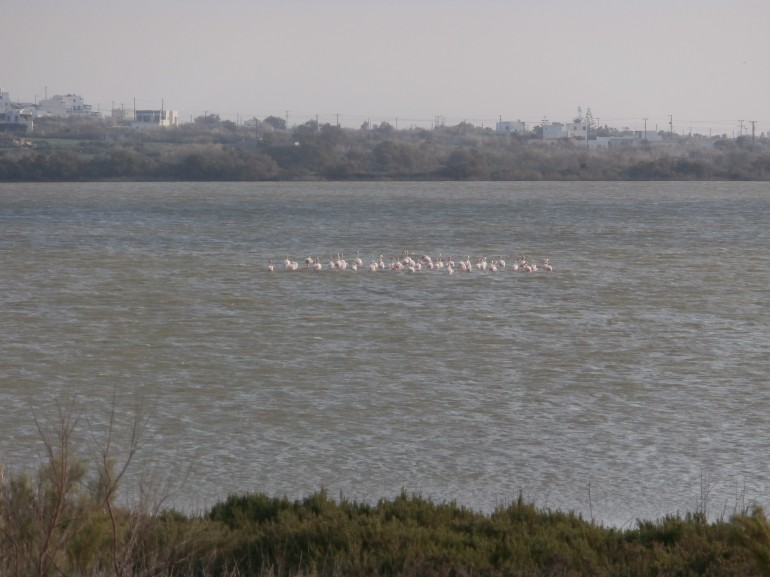 Flamingos and kitesurfing near Kedros