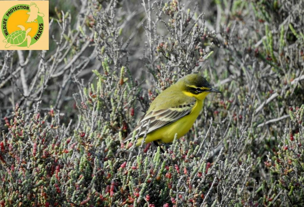 Naxos birds 1