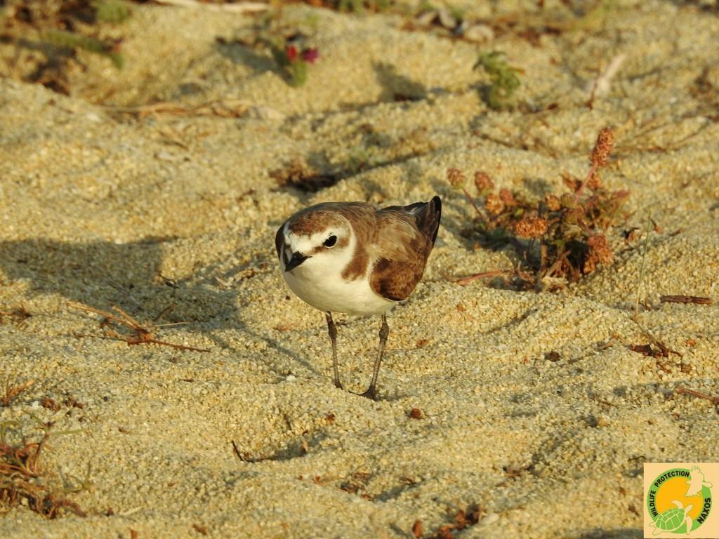 Naxos birds 12