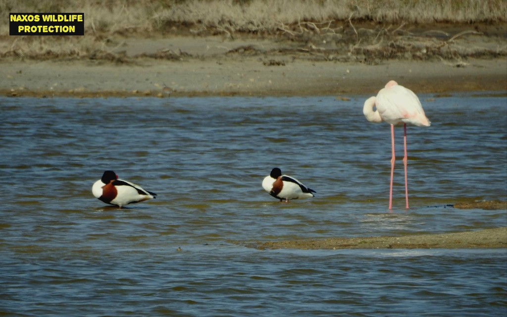 Naxos birds 13