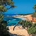 Naxos cedar forest