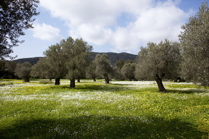 "Naxos island on New York Times: ""Peeling Back the Layers of Naxos, Greece"" by Jennifer Gilmore"
