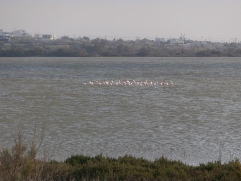 Flamingos and kitesurfing near Kedros