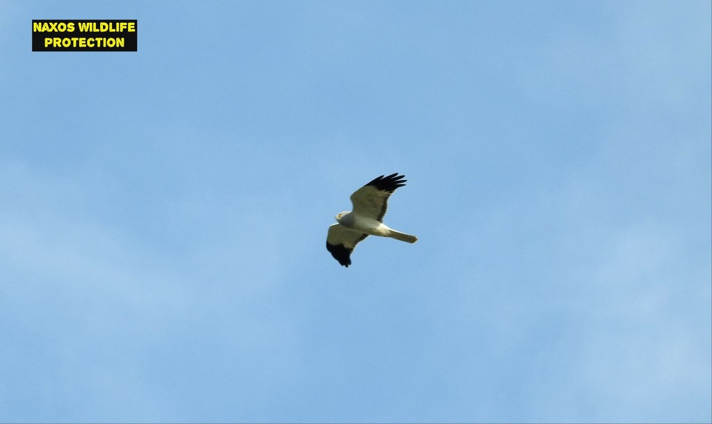 Naxos birds 16