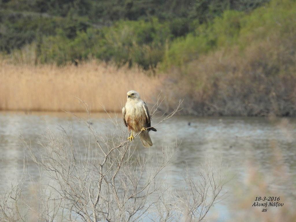 Naxos birds 19
