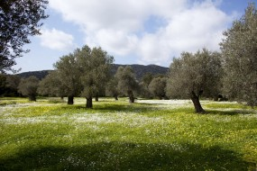 "Naxos island on New York Times: ""Peeling Back the Layers of Naxos, Greece"" by Jennifer Gilmore"