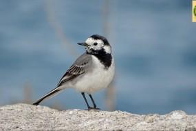Naxos birds spring 2016