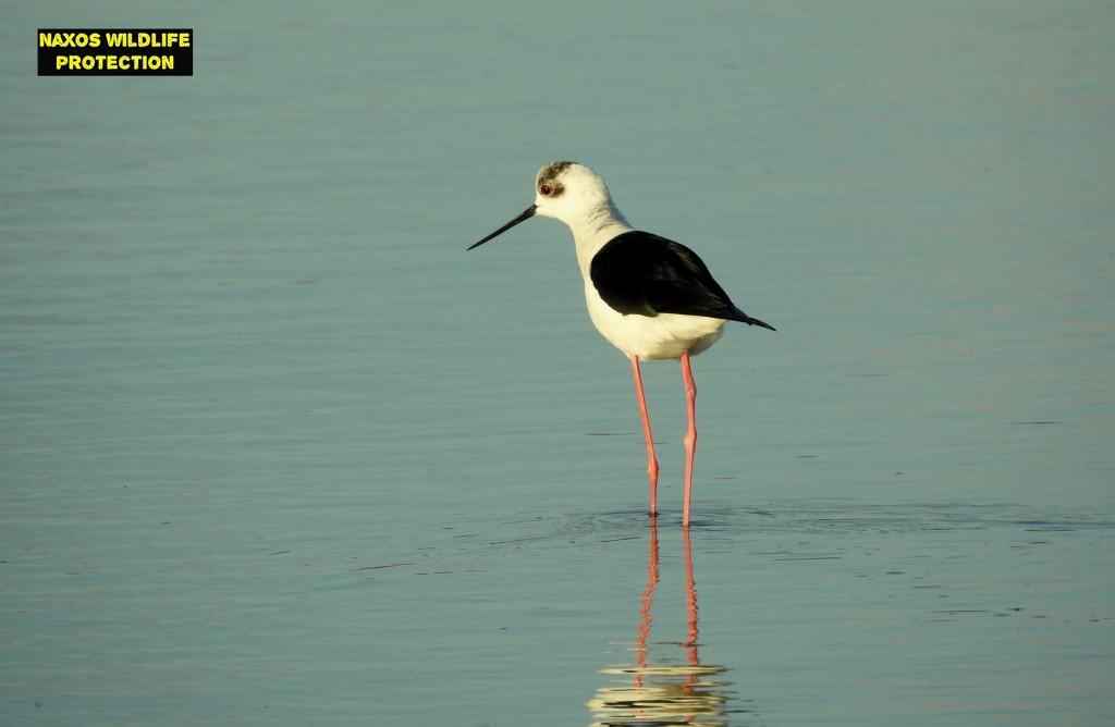 Naxos birds 4