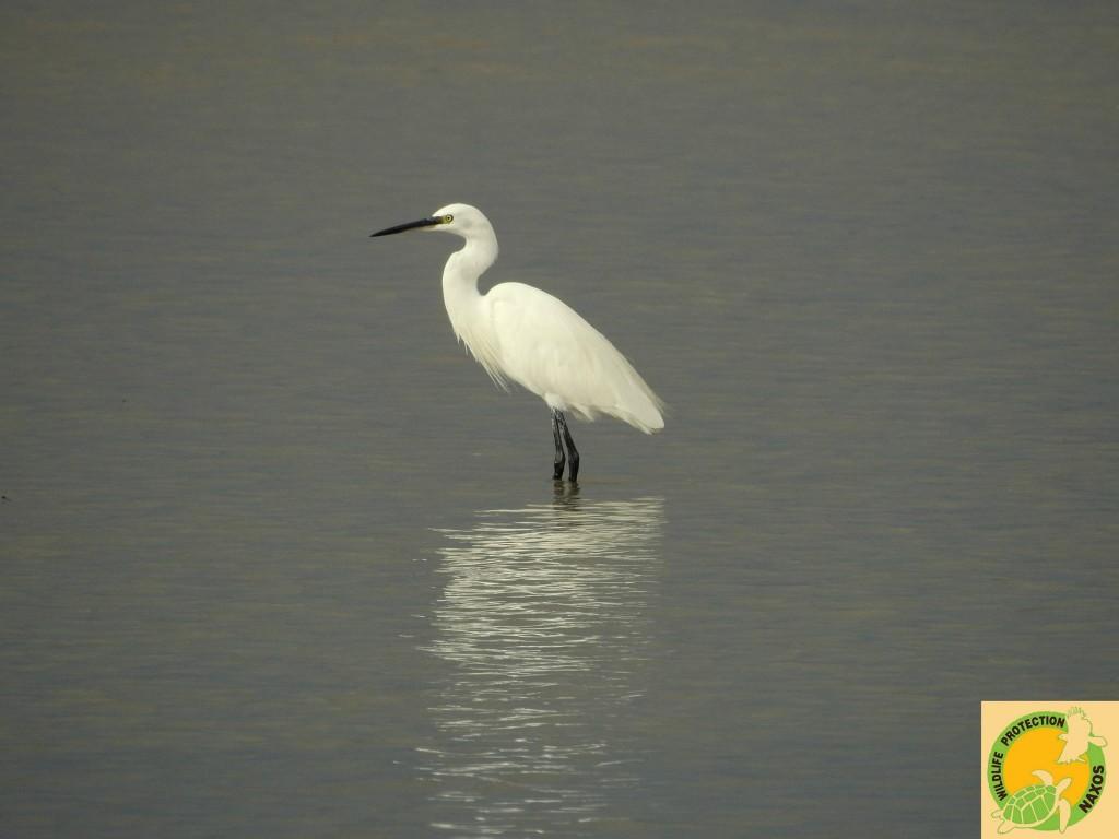 Naxos birds 7